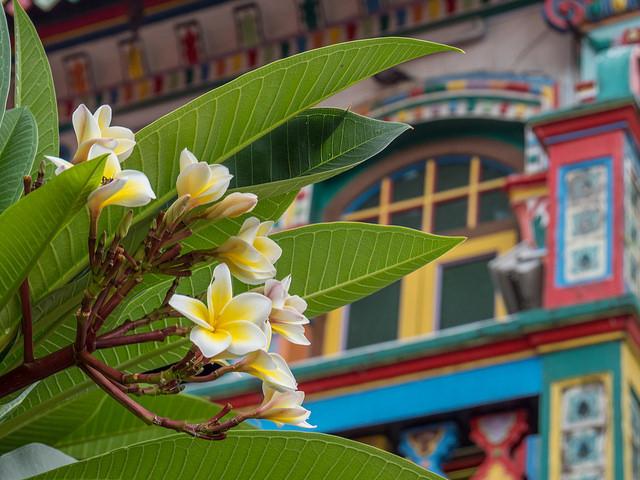 Little India Flower Singapour